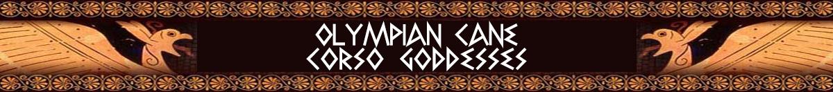 olympian-can-corso-goddesses